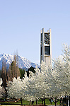 0704-01 GCS April 2007 Spring on Campus..Bell Tower, Trees in Blossom.April 5, 2007..Photo by Mark A. Philbrick/BYU..Copyright BYU Photo 2007.All Rights Reserved.photo@byu.edu  (801)422-7322