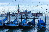 Venice, Italy. 7 February 2015. Thousands of seagulls flock at dawn in front of the island of San Giorgio Maggiore, Venice, Italy. Photo: carnivalpix/Alamy Live News