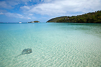 Lone Southern Stingray<br />