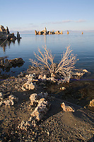 Mono Lake tufas in soft light