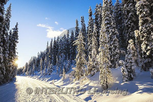 Tom Mackie, CHRISTMAS LANDSCAPES, WEIHNACHTEN WINTERLANDSCHAFTEN, NAVIDAD PAISAJES DE INVIERNO, photos,+Alberta, Banff National Park, Canada, Canadian, Canadian Rockies, North America, Tom Mackie, USA, blue, cold, footpath, freez+ing, frozen, horizontal, horizontals, landscape, national park, nature, path, pathway, pathways, pine tree, pine trees, road,+season, snow, sunburst, track, travel, weather, white, winter, wintery,Alberta, Banff National Park, Canada, Canadian, Canad+ian Rockies, North America, Tom Mackie, USA, blue, cold, footpath, freezing, frozen, horizontal, horizontals, landscape, nati+,GBTM150554-1,#xl#