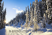 Tom Mackie, CHRISTMAS LANDSCAPES, WEIHNACHTEN WINTERLANDSCHAFTEN, NAVIDAD PAISAJES DE INVIERNO, photos,+Alberta, Banff National Park, Canada, Canadian, Canadian Rockies, North America, Tom Mackie, USA, blue, cold, footpath, freez+ing, frozen, horizontal, horizontals, landscape, national park, nature, path, pathway, pathways, pine tree, pine trees, road,+season, snow, sunburst, track, travel, weather, white, winter, wintery,Alberta, Banff National Park, Canada, Canadian, Canad+ian Rockies, North America, Tom Mackie, USA, blue, cold, footpath, freezing, frozen, horizontal, horizontals, landscape, nati+,GBTM150554-1,#xl#