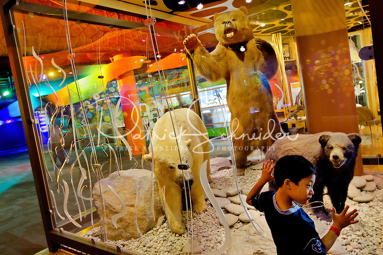 Charlotte, NC on-location photography of Discovery Place, Charlotte's hands-on science museum located in downtown Charlotte NC. In this image, a young boy examines a display of bears.