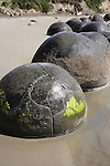 Moeraki Boulders, spherical septarian concretions created by cementation of Paleocene mudstone of the Moeraki formation, Koekohe Beach, New Zealand