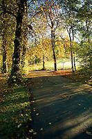 Autumn colours, Linn Park, Glasgow