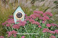 63821-22405 Birdhouse in garden with Autumn Joy Stonecrop (Sedum spectabile 'Autumn Joy') and Fountain Grass (Pennisetum setaceum) Marion Co., IL