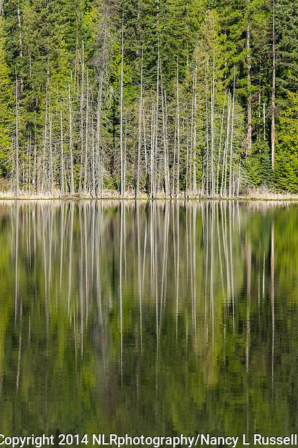 Trees reflecting on Dawson Lake