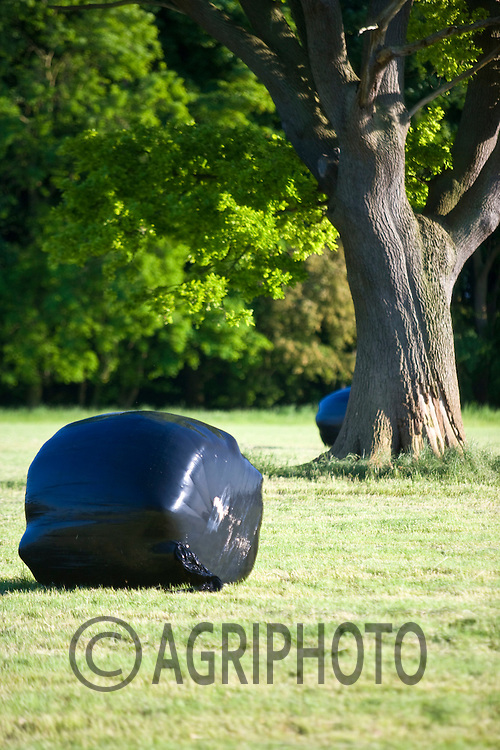 Round silage bales wrapped in black plastic