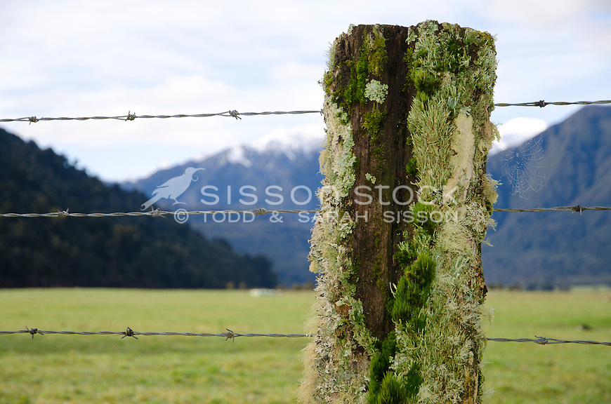 Close up of lichen-covered fence post and barbed wire. South Island, New Zealand