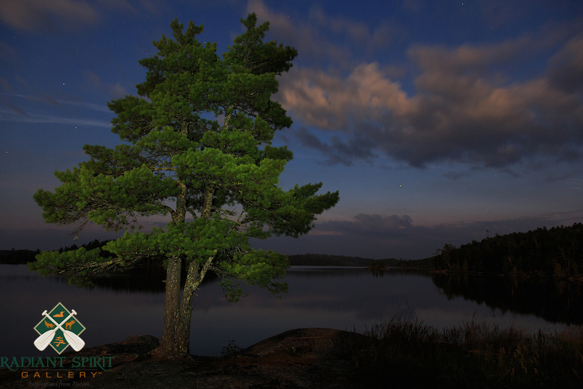&quot;White Pine on Kwanipi Lake&quot;<br /> <br /> My favorite tree stands in stark illumination against the early morning sky.<br /> ~ Day 144 of Inspired by Wilderness: A Four Season Solo Canoe Journey