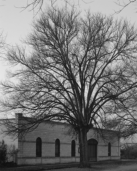 House and Tree<br />