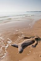 Naturkunst am Strand, Kind, Kinder bauen aus Sand und Steinchen und Muschelschalen eine Meerjungfer am Sandstrand, Meer-Jungfer, Meerjungfrau, Meernixe, Meeresnixe, Nixe, Strandkunst, Strand, Meer, Küste