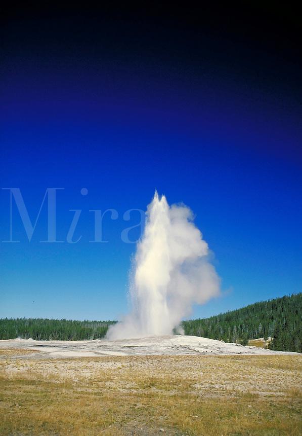 Old Faithful geyser erupting in Yellowstone National Park. Yellowstone National Park Wyoming USA.