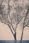 Bare tree against sea