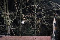 Tom Pidcock (GBR/U23/Telenet Fidea Lions) seriously 'airborn'<br /> <br /> U23 race<br /> Superprestige Diegem / Belgium 2017