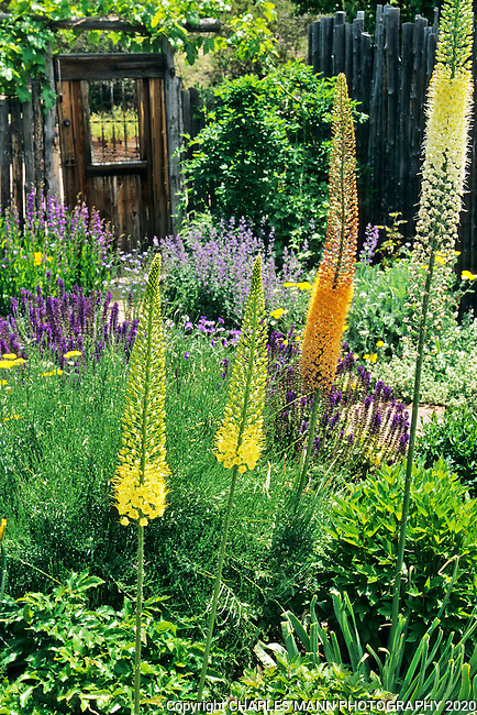 Catherine Clemens, a landscape architect and  owner of Clemens & Associates a design-build garden business, created a xeric landscape for her personal residence in Santa Fe.