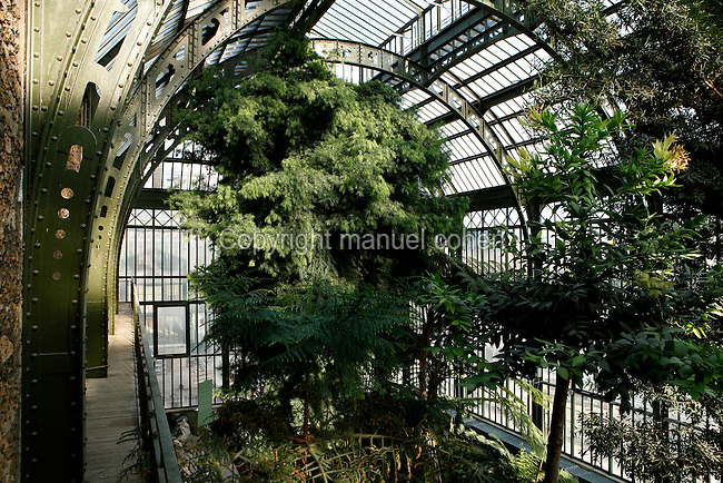 Plant History Glasshouse (formerly Australian Glasshouse), 1830s, Rohault de Fleury, Jardin des Plantes, Museum National d'Histoire Naturelle, Paris, France. Low angle view of the glass and iron roof, seen from the first floor, arching above a Podocarpus Elongata (SW Africa) growing below.