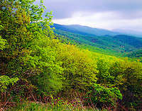 Lush spring greenery, Shenendoah National Park, Virginia, Skyline Drive, Appalachian Mountains, evening, May