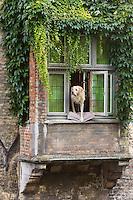 Belgique, Flandre-Occidentale, Bruges, centre historique classé Patrimoine Mondial de l'UNESCO, Chien à la fenêtre, long du canal Groenerei (Canal vert) , on retrouve ce chien dans le film : Bons Baisers de Bruges  / Belgium, Western Flanders, Bruges, historical centre listed as World Heritage by UNESCO,  Groenerei Canal, (Green Canal)  Dog in the window, along the Groenerei channel (green channel),   this dog is  in the movie In Bruges