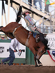 Ryan Gray competes in the bareback bronc riding event at the Reno Rodeo in Reno, Nev. on Friday, June 19, 2015.<br /> Photo by Cathleen Allison/Nevada Photo Source