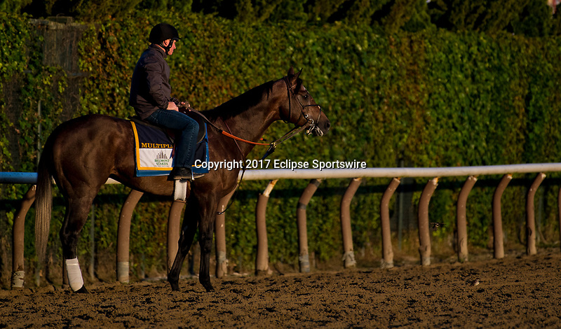 ELMONT, NY - JUNE 09: Multiplier exercises during morning workouts in preparation for the Belmont Stakes at Belmont Park on June 9, 2017 in Elmont, New York (Photo by Scott Serio/Eclipse Sportswire/Getty Images)