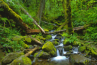 Stream in Columbia River Gorge National Scenic Area, Oregon, US.