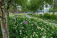 Anchorage Museum, naturalistic landscaping