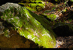 Moss on Boulders in Spring, Eastern Approach Trail to Lower Yosemite Fall, Yosemite National Park