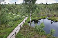 Holzbohlenweg, Weg führt durch das Hochmoor, Moor NSG Mecklenbruch, nordöstlich von Silberborn, Solling, Niedersachsen, Deutschland, Naturschutzgebiet