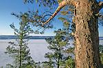 Fjord du Saguenay vu depuis la rive. Canada. Québec en hiver.