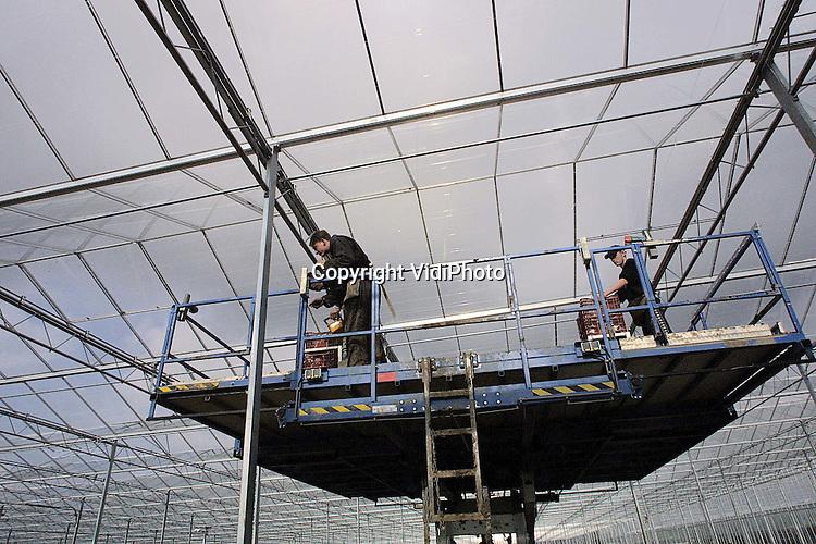 Foto: VidiPhoto..POEDEROIJEN - Bij Worldwide Satter Flowers (WSF) in Poederoijen, een van de grootste chrysantenkwekers van Nederland, wordt op dit moment gebouwd aan een nieuw kassencomplex van 5 hectare. Daarmee bereikt de megakweker een totaaloppervlakte van 30 hectare. In de loop van dit jaar komt daar nog eens ruim 5 hectare bij. In de kwekerij worden straks de modernste verwarmings- en oogsttechnieken aangebracht. In de week van 9 april moeten de bouwwerkzaamheden klaar zijn.
