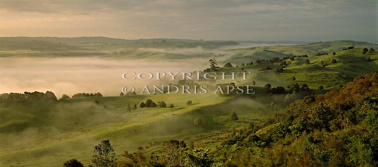Green rolling farmland near Huntly.  Dotted with trees. Low lying mist. Waikato Region. New Zealand.