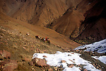 Trekking group with mules in snow covered valley, Atlas Mountains, Morocco