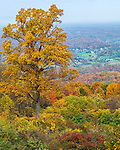 Shenandoah National Park, VA: A fall colored hillside overlooking the Shenandoah Valley from Pass Mountain Overlook