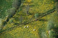 Europe/France/Pays de la Loire/49/Maine-et-Loire/Env de Saumur: Le bocage  -  vue aérienne