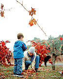 USA, California, boy standing and woman gathering autumn leaves in a vineyard, Calistoga