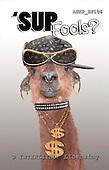 Samantha, ANIMALS,  photos,+camel,++++,AUKPSP106,#A# Humor, lustig, divertido