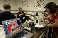 Leslie Harris of the Natural History Museum of Los Angeles County looks through a <br /> microscope to study a worm she collected, while James Carlton, the Director of Maritime Studies Program in CT confers with Charles Lambert of the University of Washington Friday Harbor Laboratory. Scientists study their samples in a lab after collecting in San Francisco Bay, THE most impacted ecosystem in the world. Since 1970, on average, one new species has been introduced every 24 weeks into the bay and surrounding estuaries. According to Dr. Andrew Cohen of the San Francisco Bay Estuary Institute, the bay has over 240 invasive species. Most of the fish found in the Bay's delta are non-native. All of these non-indigenous species have had a profound impact on the ecology of San Francisco Bay. <br /> Ballast water moved from port to port also spreads human pathogens--there is evidence <br /> that cholera bacteria that returned to Peru in 199 was the first outbreak in the Western <br /> Hemisphere in a century. It was brought by ships from Asia in ballast water.