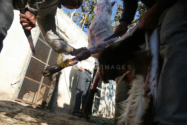 A Palestinian butchers stands in the blood of slaughtered sheep on the first day of Eid al-Adha in the West Bank city of Hebron on Nov. 06, 2011. Muslims worldwide celebrate Eid al-Adha, or the Feast of the Sacrifice, by sacrificial killings of livestock to commemorate a religious story of Abraham. Photo by Issam Rimawi