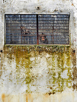 Adult Long Tailed Macaque monkeys look through the bars at the Conghua Yueyuan Laboratory Animal Breeding Center, Guangdong Province, China. The center breeds monkeys mostly for export to the US and Europe where pharmaceautical and cosmetic companies use them vivisection...SINOPIX PHOTO