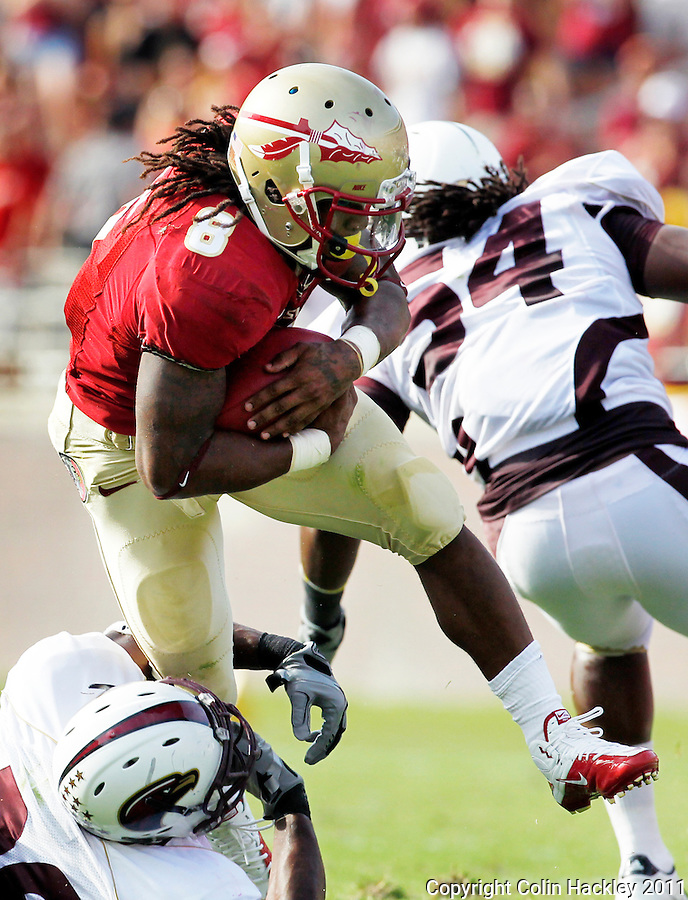 TALLAHASSEE, FL 9/3/11-FSU-ULM FB090311 CH-Florida State's Devonta Freeman is snagged by University of Louisiana at Monroe's Nate Brown during second half action Saturday at Doak Campbell Stadium in Tallahassee. The Seminole's beat the Warhawks 34-0. .COLIN HACKLEY PHOTO
