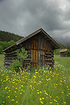 Cattle shelter in spring meadow,Imst district, Tyrol/Tirol, Austria, Alps.