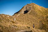 NEW ZEALAND, Wanaka, Meeting some Sheep Hiking on Roy's Peak, Ben M Thomas