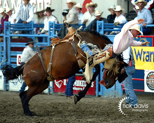 The Beutler & Son Rodeo Company bronc Secret Agent proved to be a handful for Tyler Corrington as he is sent to the ground during short go round action at the annual Greeley Independence Stampede Rodeo on July 4, 2008 in Greeley, Colorado.