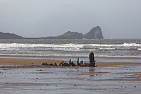 Pictured: The remnants of the Helvetia ship wreck with Worm's Head in the backgorund. Tuesday 18 February 2020<br /> Re: General view of Rhossili in the Gower Peninsula near Swansea, Wales, UK.