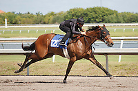 #120Fasig-Tipton Florida Sale,Under Tack Show. Palm Meadows Florida 03-23-2012 Arron Haggart/Eclipse Sportswire.