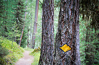 A tree with a Swiss trail marker on it in the forest above Zermatt, Switzerland