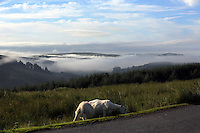 WEATHER PICTURE WALES<br />Pictured: Early morning fog in the valleys surrounding the Brecon Beacons in south Wales. Monday 18 July 2016<br />Re: Sunshine and high temperatures are due to affect most of the UK this week.