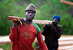 Men carrying lumber at a logging operation in central Malawi.
