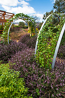 Vegetable garden with herbs at Sunset gardens, Cornerstone, Sonoma